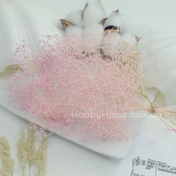 Гіпсофіла стабілізована пучок , рожева