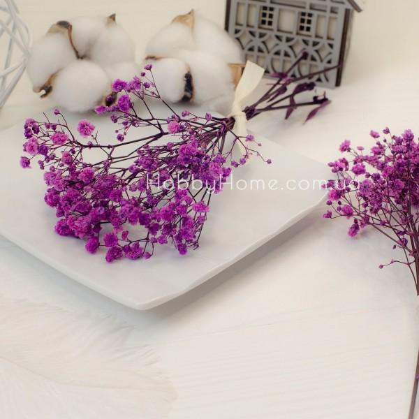 Гіпсофіла стабілізована Пухнаста , фіолетова